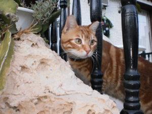 http://villa-u-mare.ru/otdyh/osobaya-dostoprimechatelnost-kipra